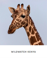 Wildwatch_Kenya
